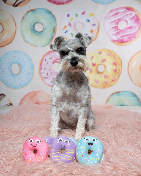 donutgrowup-luckylolastudios-allpawsretreat-190101-001-3