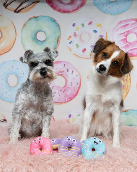 donutgrowup-luckylolastudios-allpawsretreat-190101-001-4