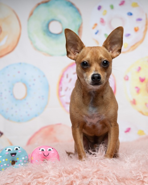 donutgrowup-luckylolastudios-allpawsretreat-190103-001-10