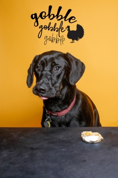 luckylolastudios-allpaws-Thanksgiving-2303-Edit